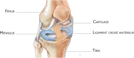 Microfractures for Douleur au genou gauche interieur